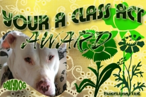 daisydog-class-act-award