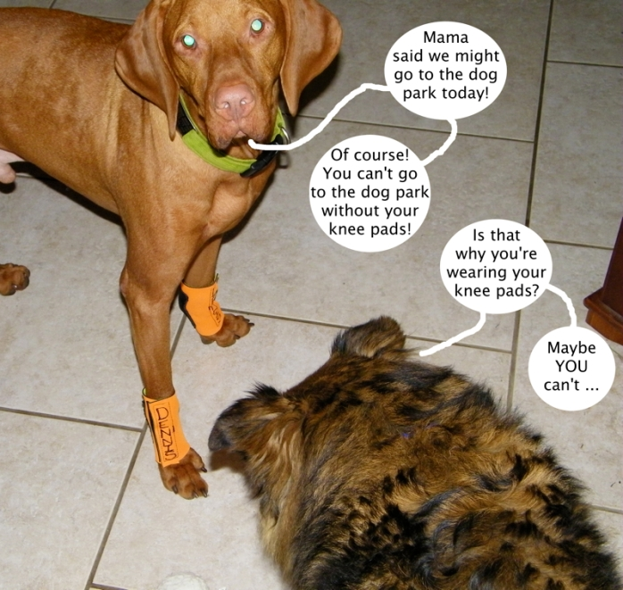 dog_park_knee_pads