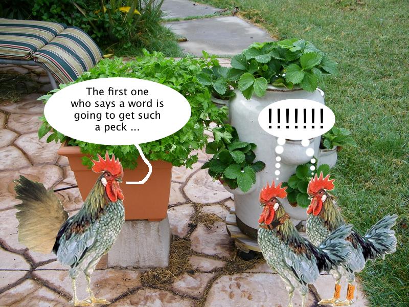 three_chickens