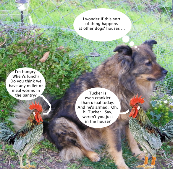 trixie_and_the_chickens