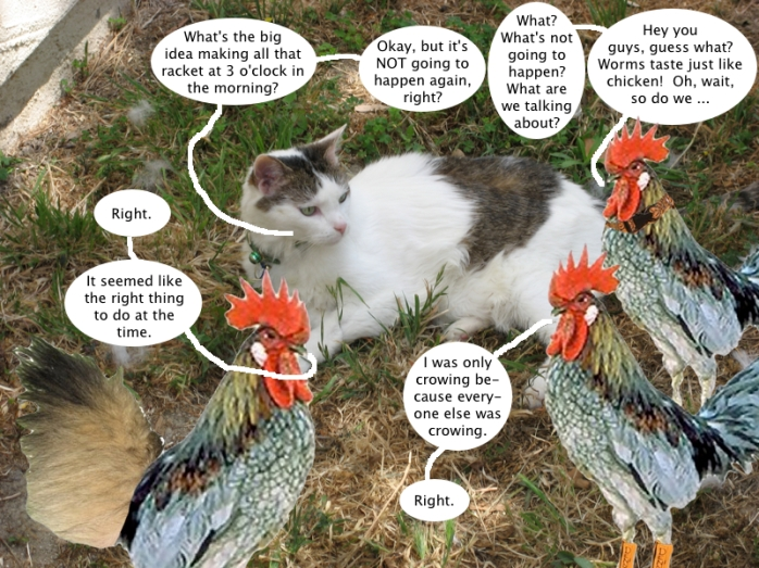 trouble_and_the_chickens