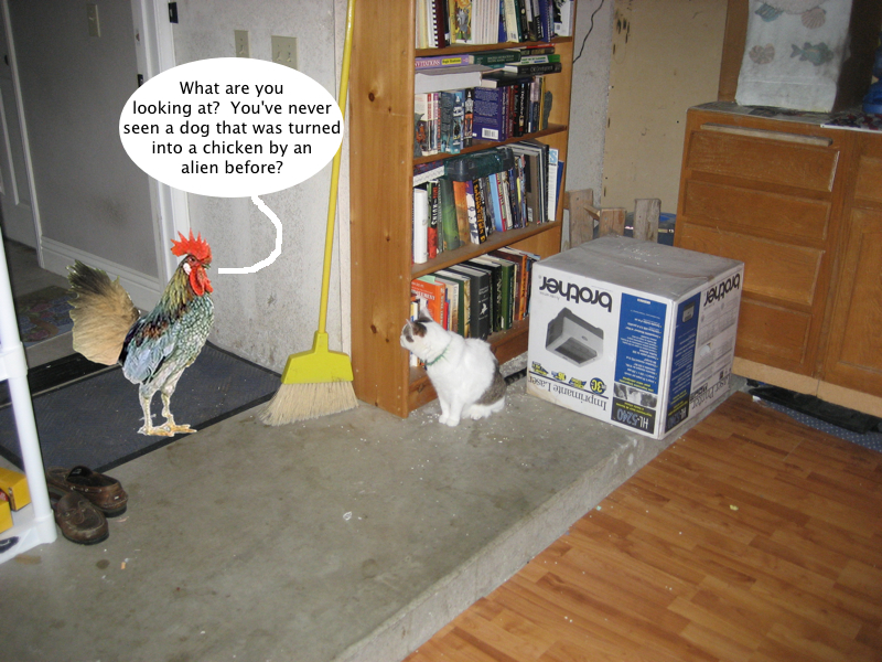 trouble_meets_trixie_the_chicken
