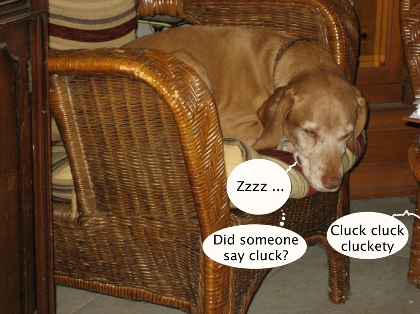 tucker_who_said_cluck