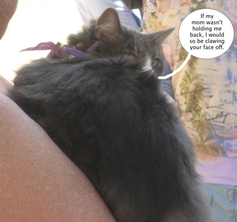 cat_glowering_over_shoulder