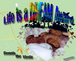 dennis-the-vizla-life-is-a-dream-award