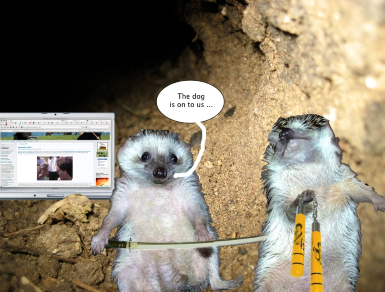 ninja_hedgehogs_tunnel_macbook
