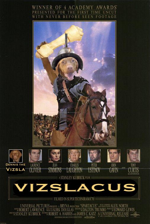 vizslacus