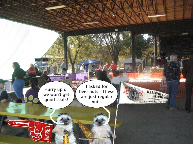 hedgehogs_at_flyball