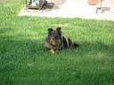 trixie_back_yard_grass_1