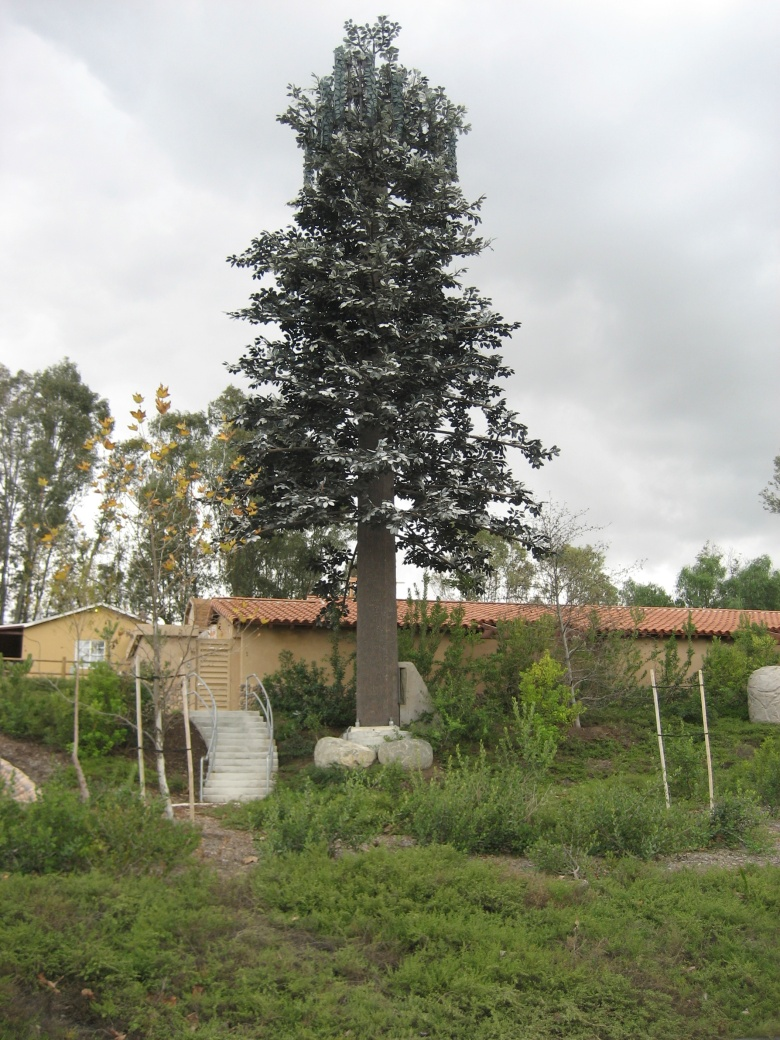 this tree is bolted to the grownd presumably to protekt it frum erthkwayks!!!