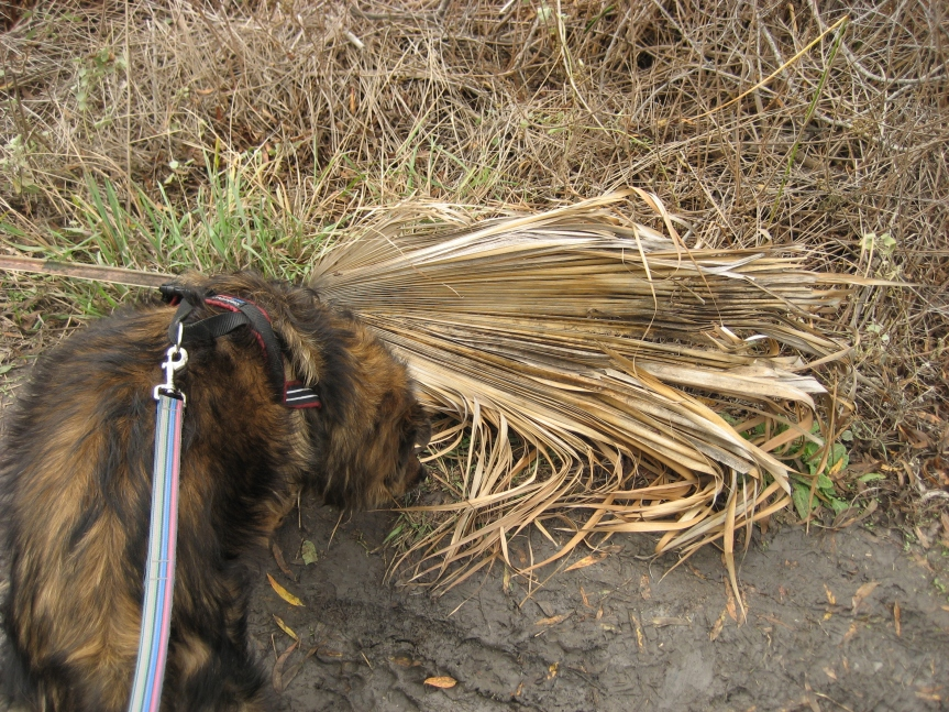 """""""I'm pretty sure this is an old palm frond, but whatever."""""""