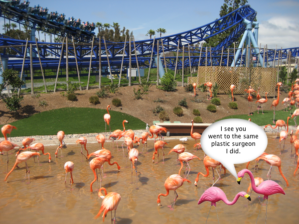 SeaWorld_Flamingo