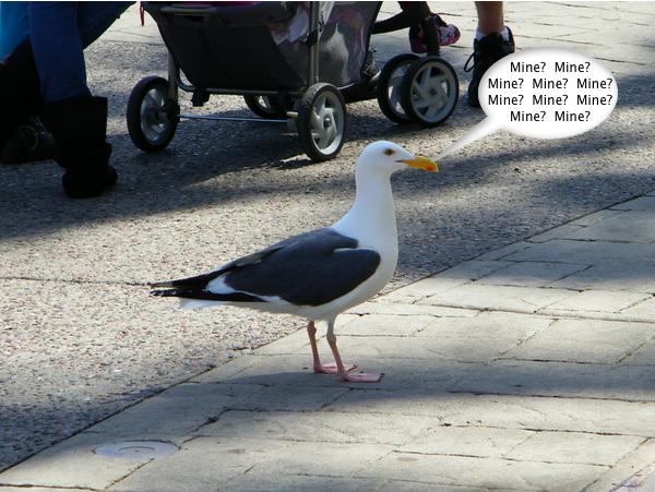 SeaWorld_Seagull