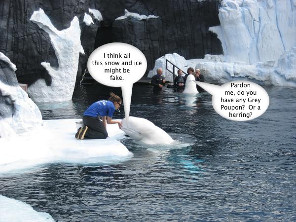 SeaWorld_SuspiciousBeluga