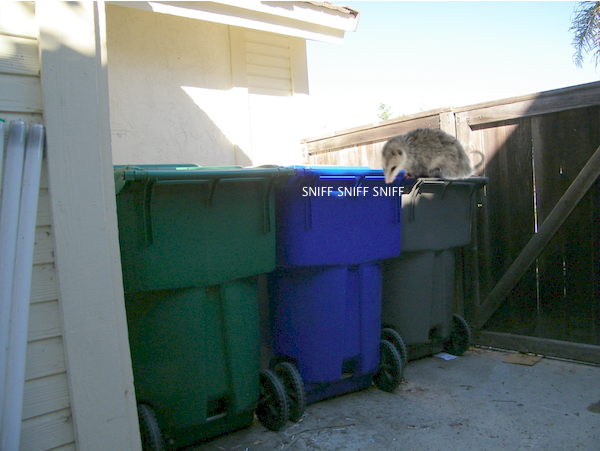 possum_trash_1
