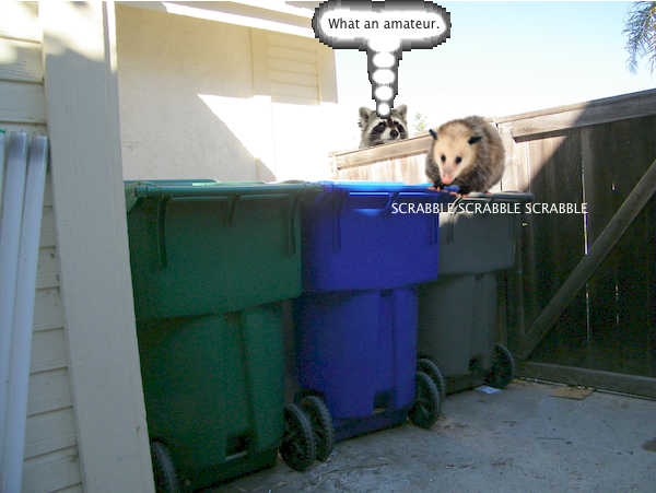 possum_trash_2