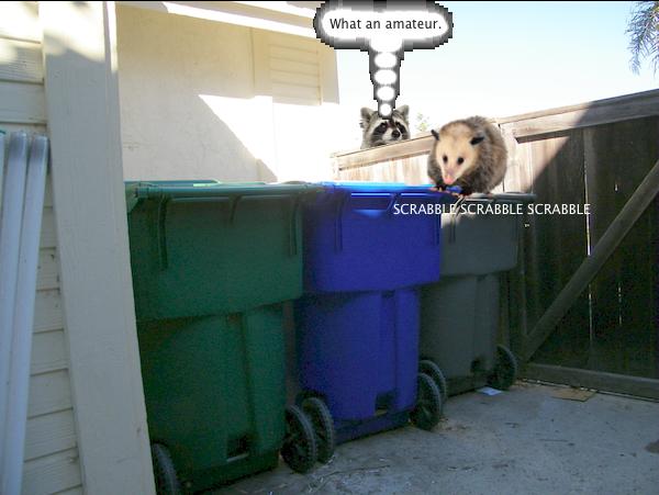 possum_trash_2