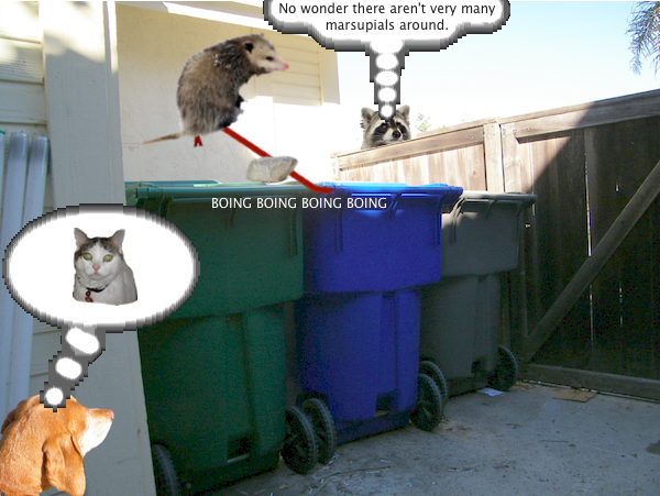 possum_trash_4