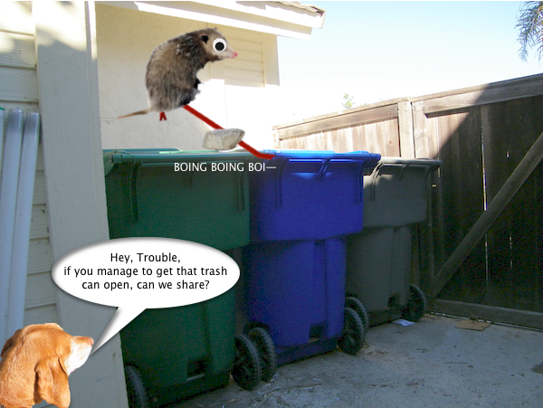 possum_trash_5