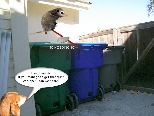 possum_trash_5