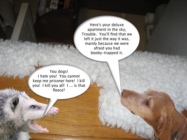 opossum_prisoner_1