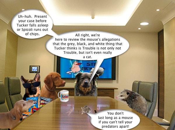 possum_boardroom_1