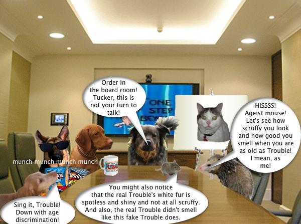 possum_boardroom_3