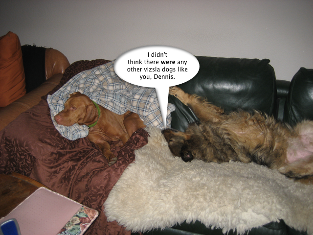 trixie_no_other_dogs_like_dennis