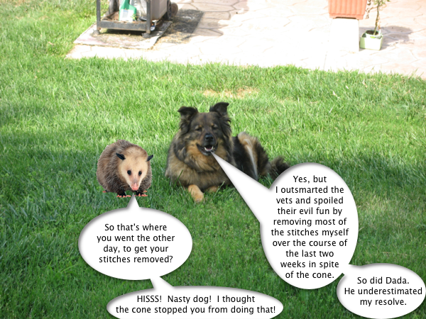 trixie_possum_2
