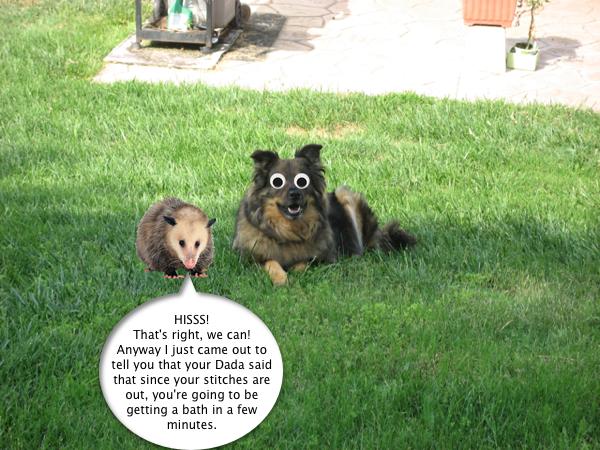 trixie_possum_4