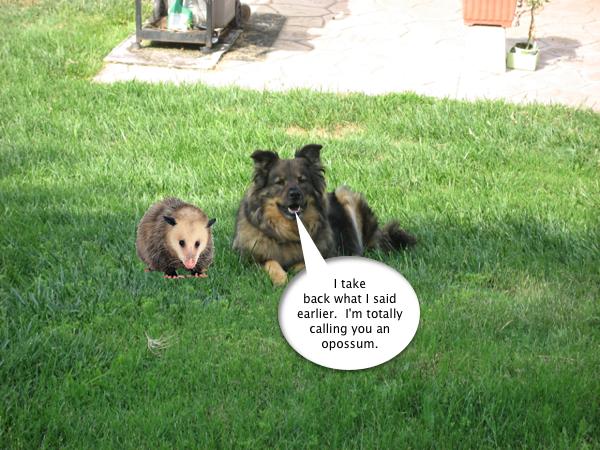 trixie_possum_5