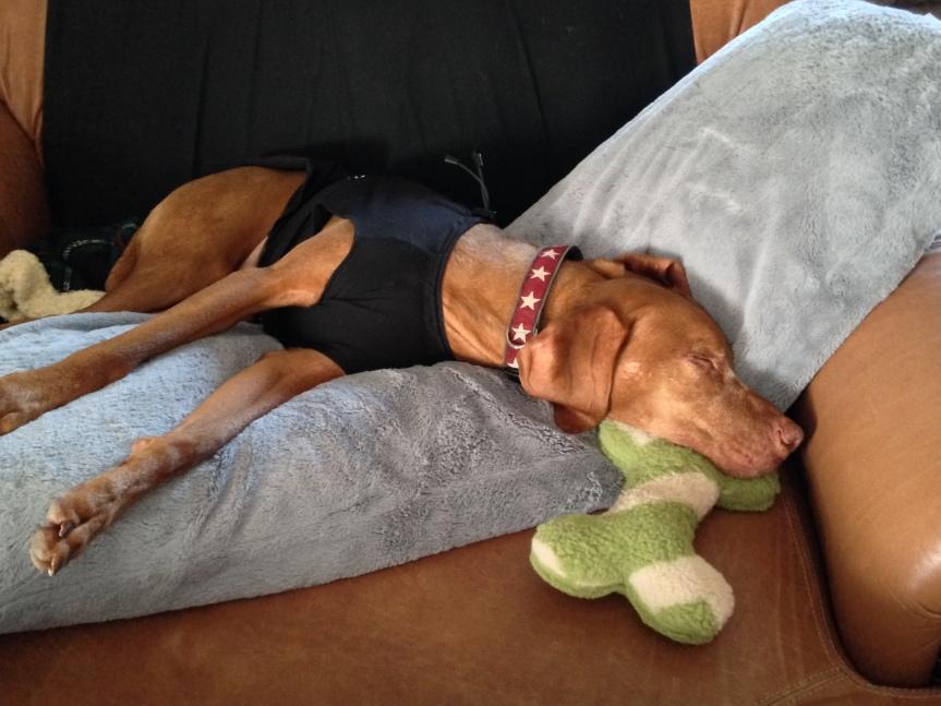 bone_pillow_1