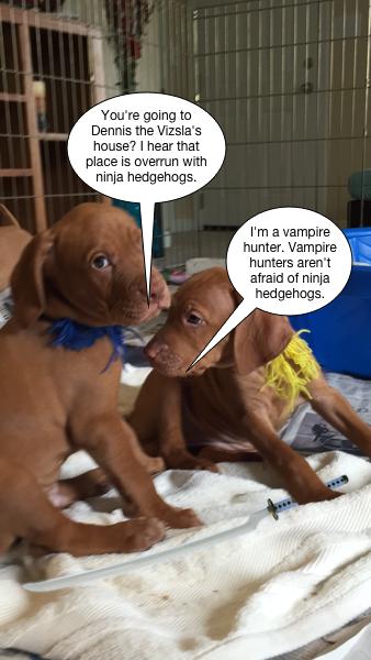 saya_puppy_vampire_hunter
