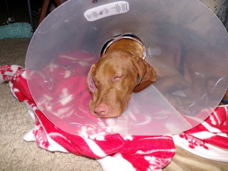 Saya resting after removal of her head bandage.