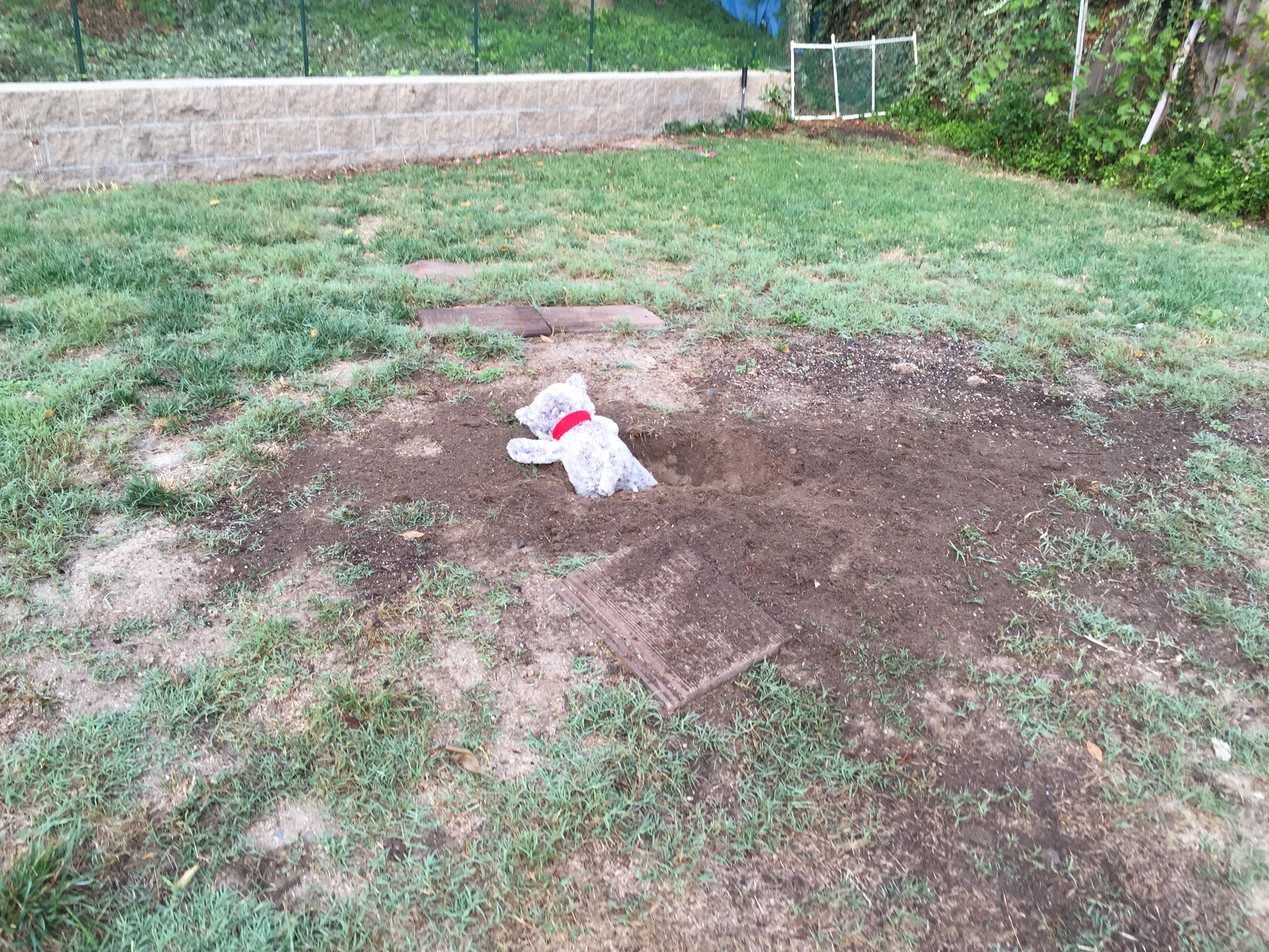 mostly wordless wednesday shallow grave dennis u0027s diary of