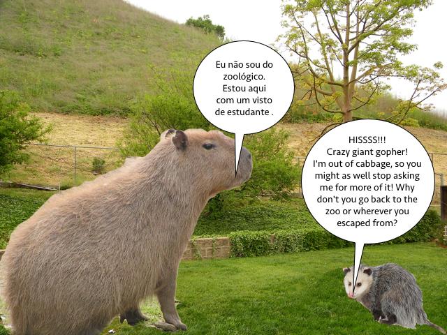 possum_capybara_yard_1