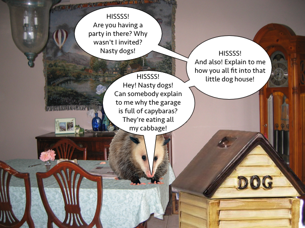 possum_doghouse_of_justice_1