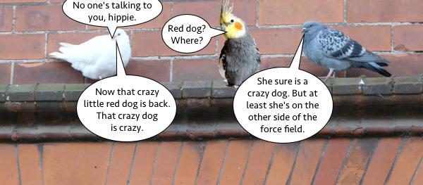 pigeon_talk_2