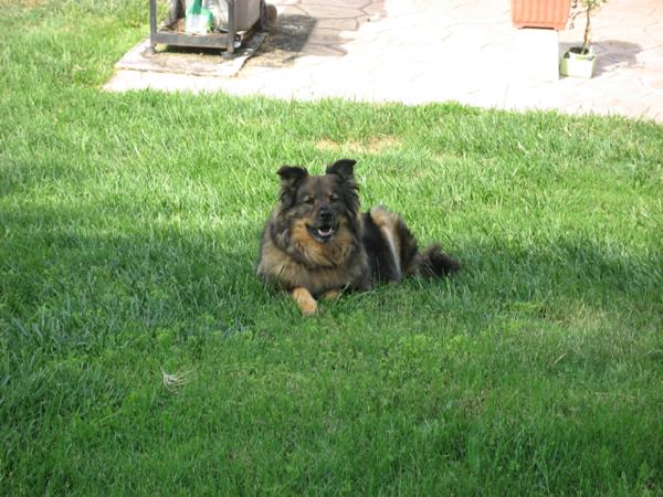 trixie_back_yard_grass