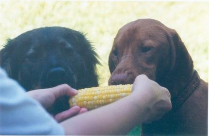 Corn Dogs_20160424123214_1200