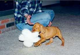 Little Man, Big Stuffie