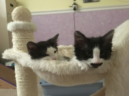 Rub-a-dub-dock, two cats in a hammock.