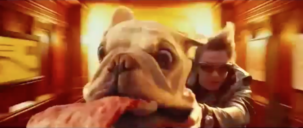 pizza_dog