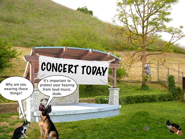 concert_today_5